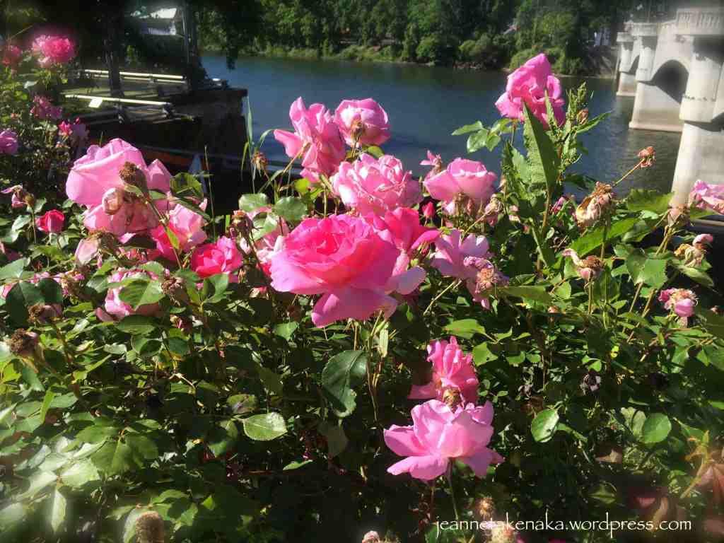 Roses and a bridge