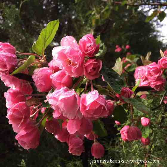 Rain kissed flowers