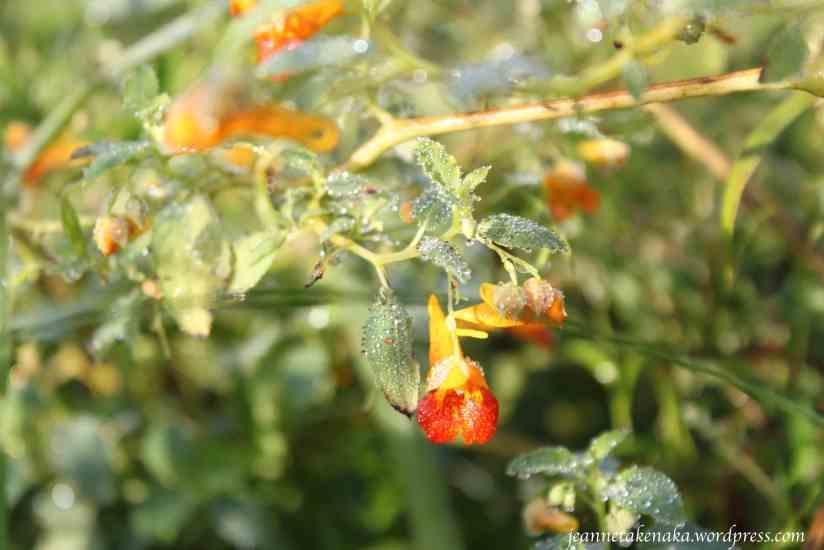 dew-dotted-flower