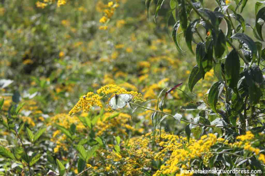 pastel-butterfly