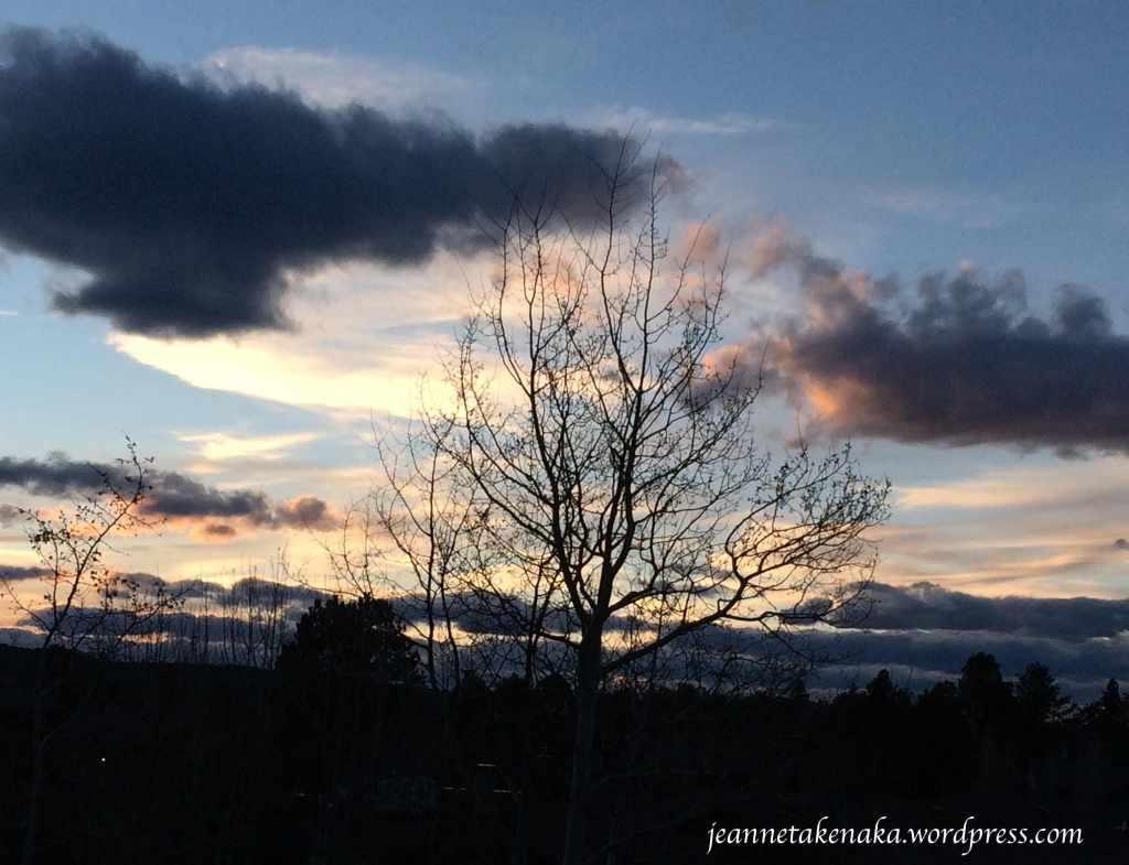silhouette-sunset-tree