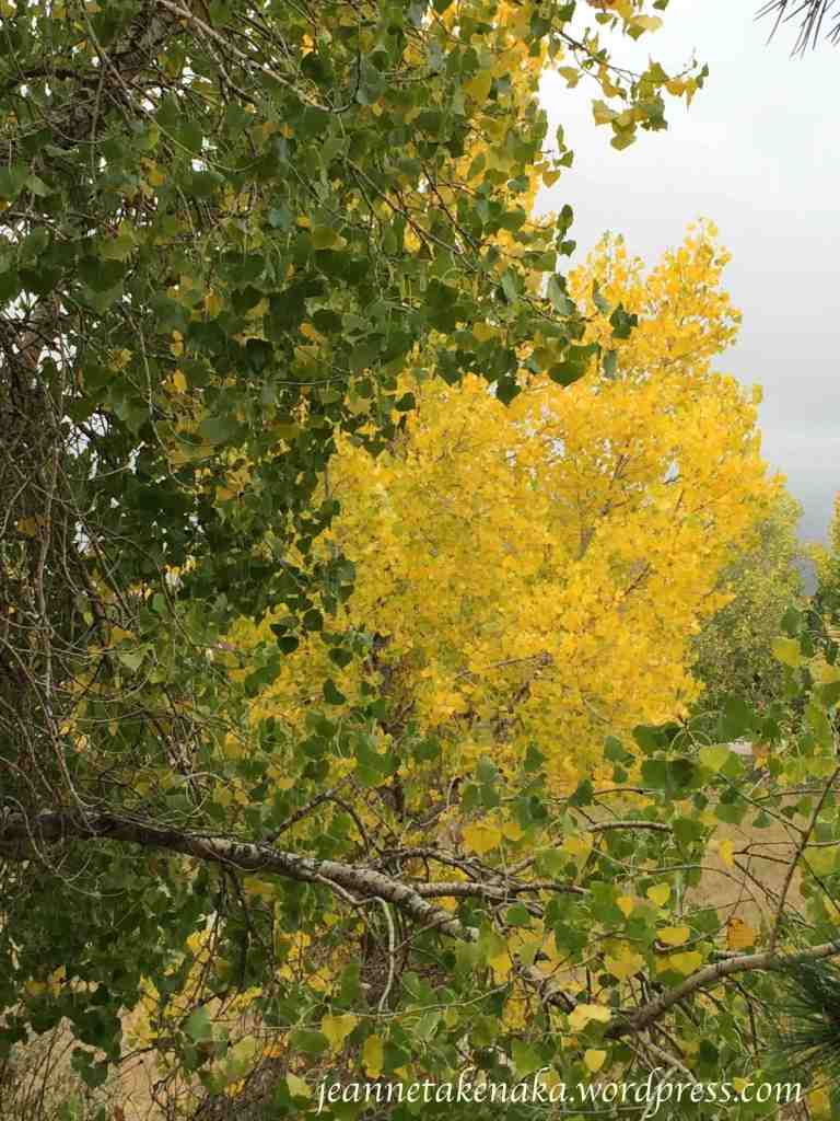 changing-aspen-leaves