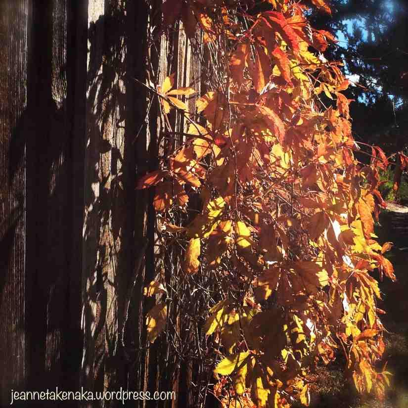 orange-vine-on-fence