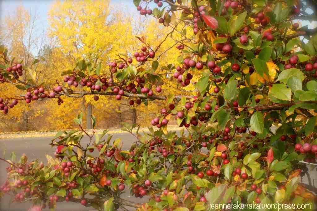 fall-crabapples