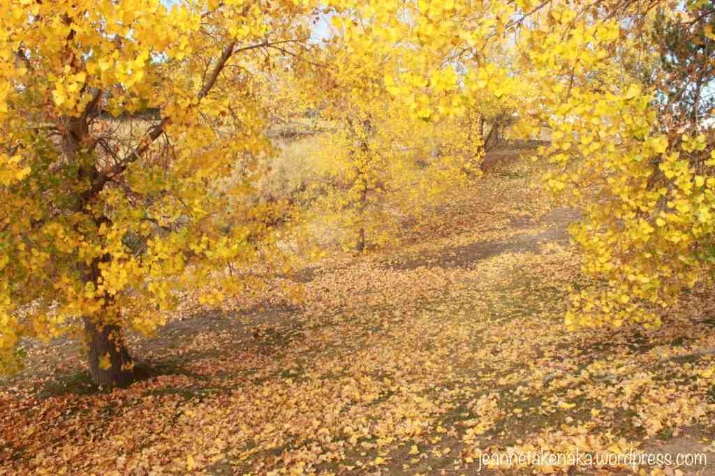 leaves-everywhere