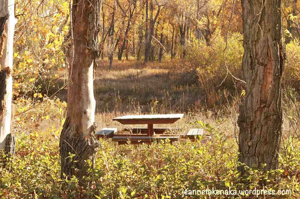 picnic-table-in-fall