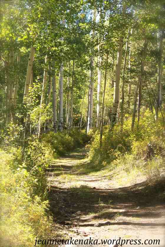aspen-lined-path