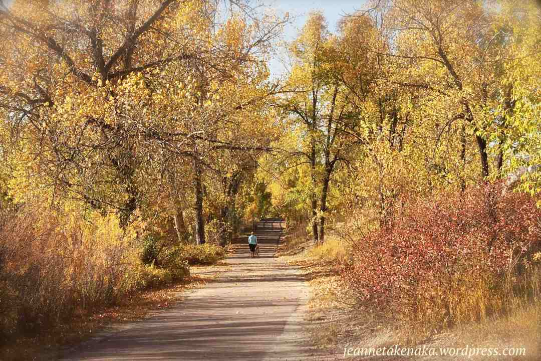 A paved pathway leading between autumn-colored trees
