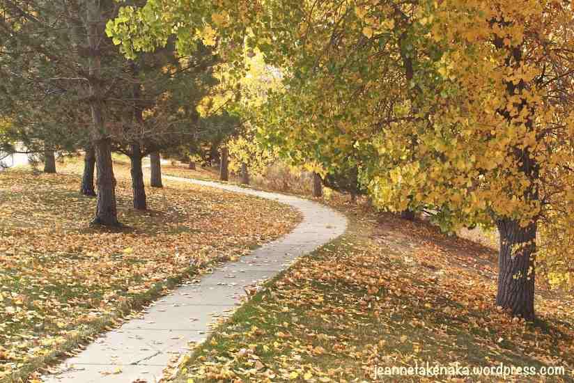 winding-leafy-walk