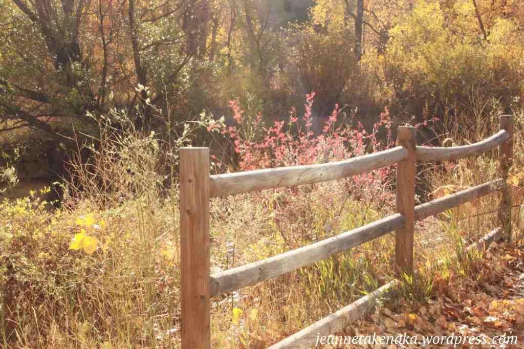 autumn-fence
