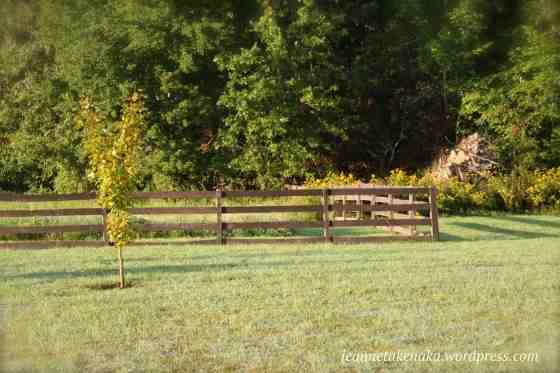 fence-boundary