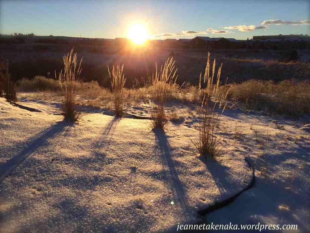 four-bushes-in-morning-sun