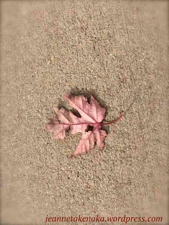 hole-filled-leaf