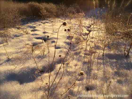 scrawny-flower-morning-sun