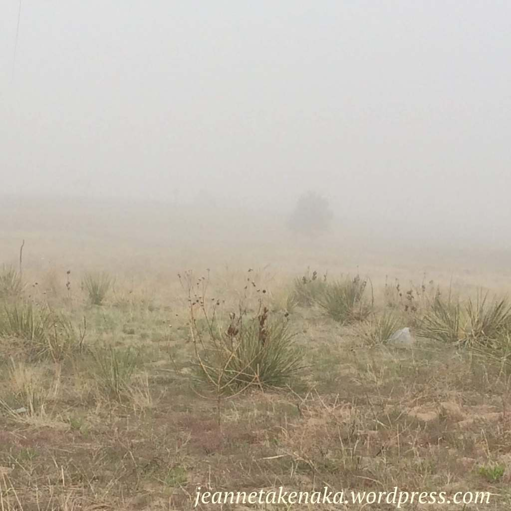 fog-in-the-grasses