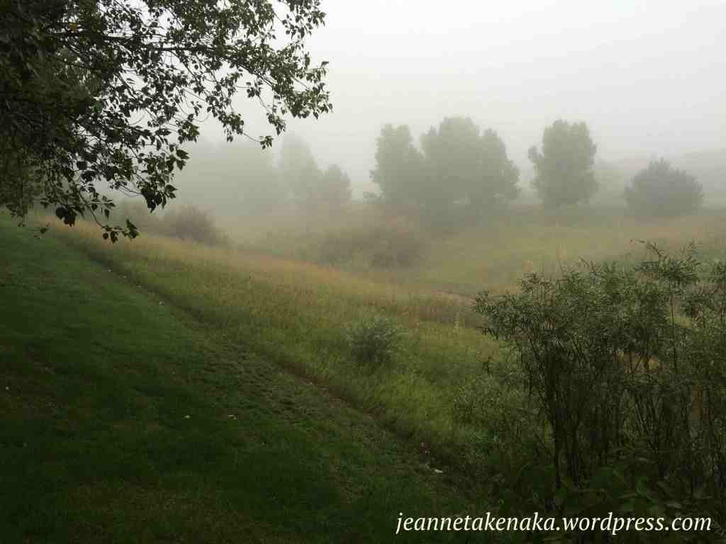foggy-morning-trees