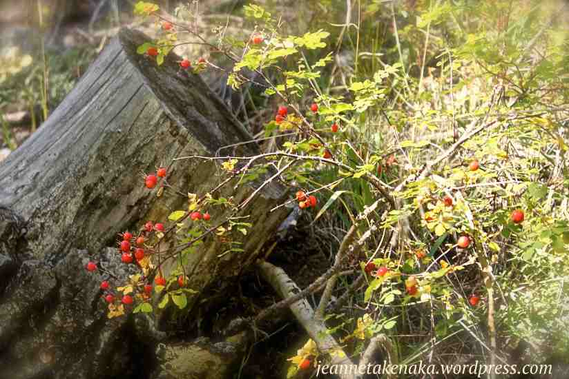 A stump with a bush with red berries nearby.