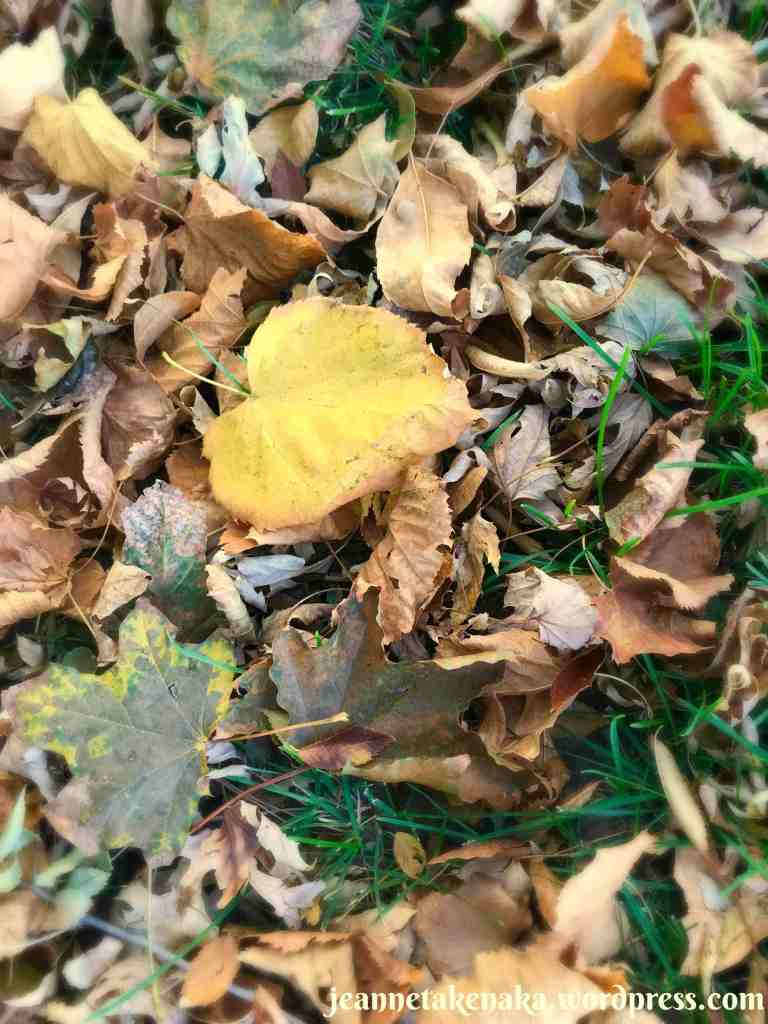 A yellow leaf, curled and spotted, showing imperfection amid a pile of brown leaves