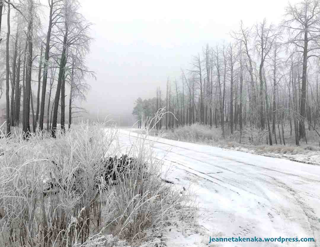 A snowy road lined with barren tress and fog