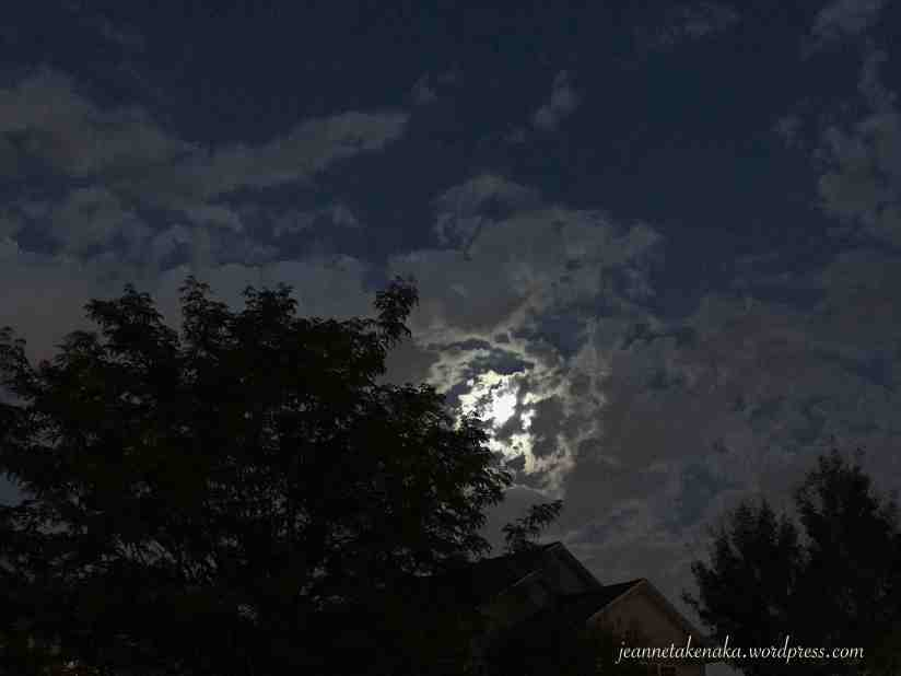 A cloud speckled white moon reflecting through the clouds and silhouetting tree branches