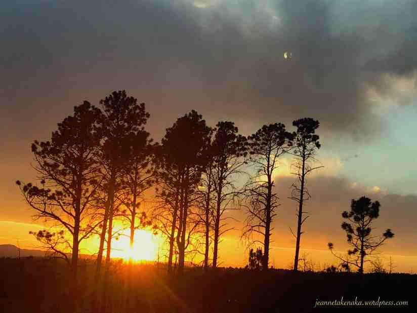 Burned trees silhouetted by the setting sun