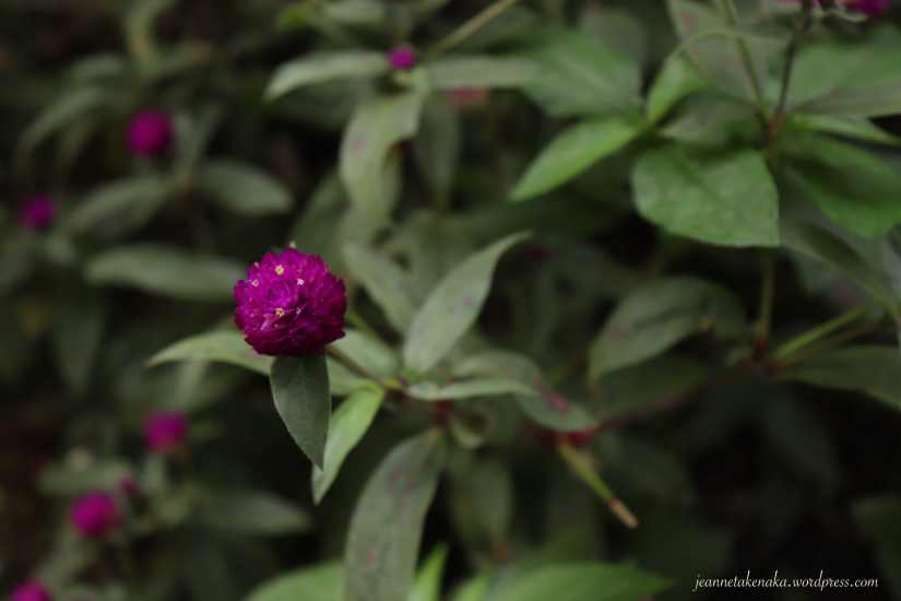 Small purple flowers with a background of dark green leaves