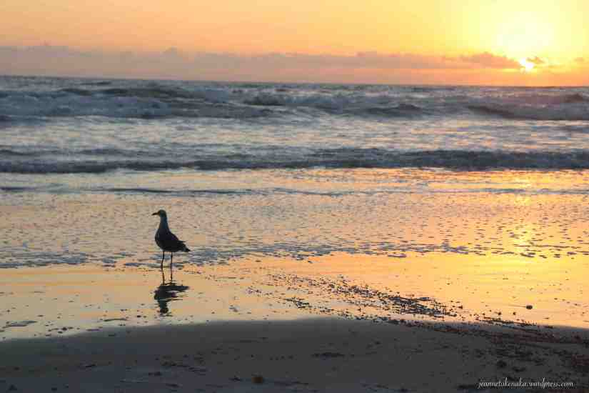 Image of a sea gull in silhouette with a beach sunrise backdrop