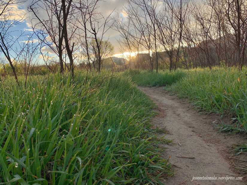 A spring morning with sunshine cresting the horizon and making morning dew sparkle—symbolic of the hope we have in Jesus