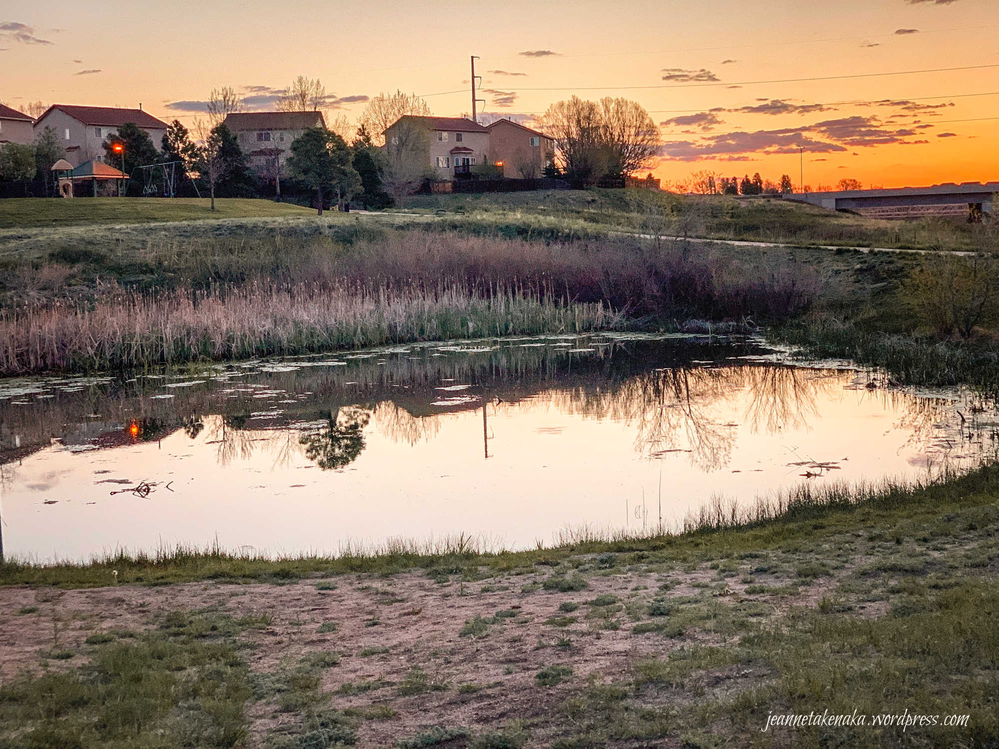 A still pond reflecting sunrise colors and the neighborhood behind it
