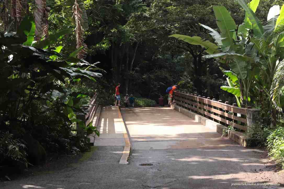 A bridge on a tropical path, the other side of which leads to a darker part of the path
