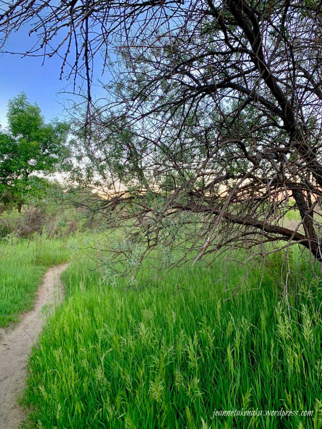 A small path leading between grasses and trees