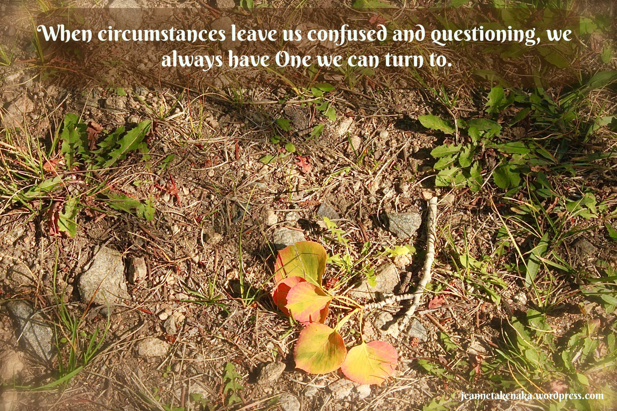 """Meme that says, """"When circumstances leave us confused and questioning, we always have One we can turn to."""" on a backdrop of leaves on a broken twig"""