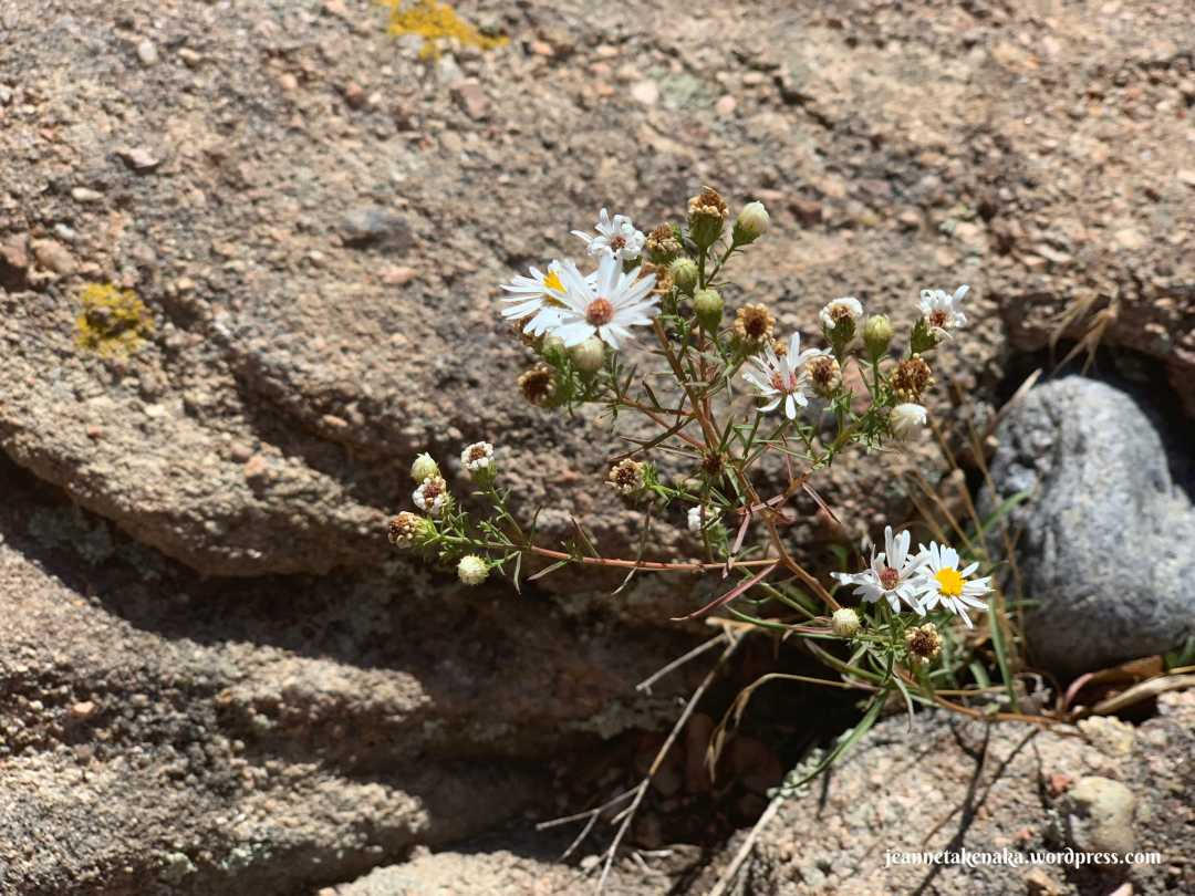 Image of wildflowers growing from a crevice between rocks