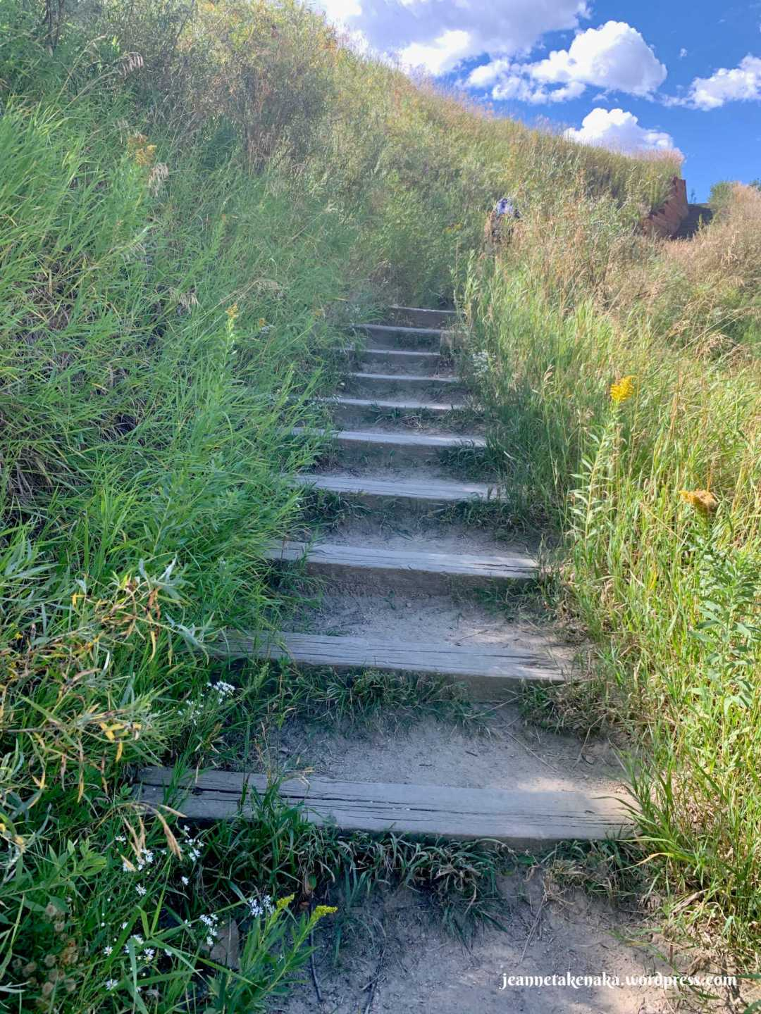Wooden stairs leading up a grassy hill
