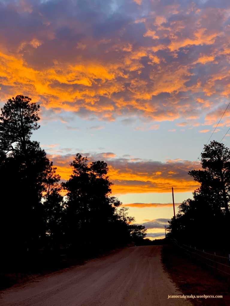 Image of a sunset over a tree-lined dirt road, the trees in silhouette