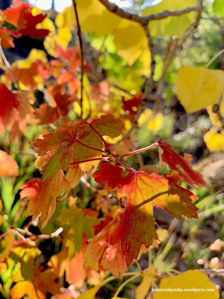Leaves colored red and yellow with pieces eaten out of them—imperfect