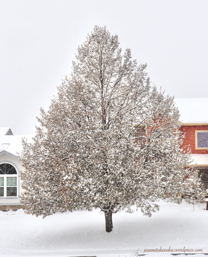 A tree covered in snow on a stormy day
