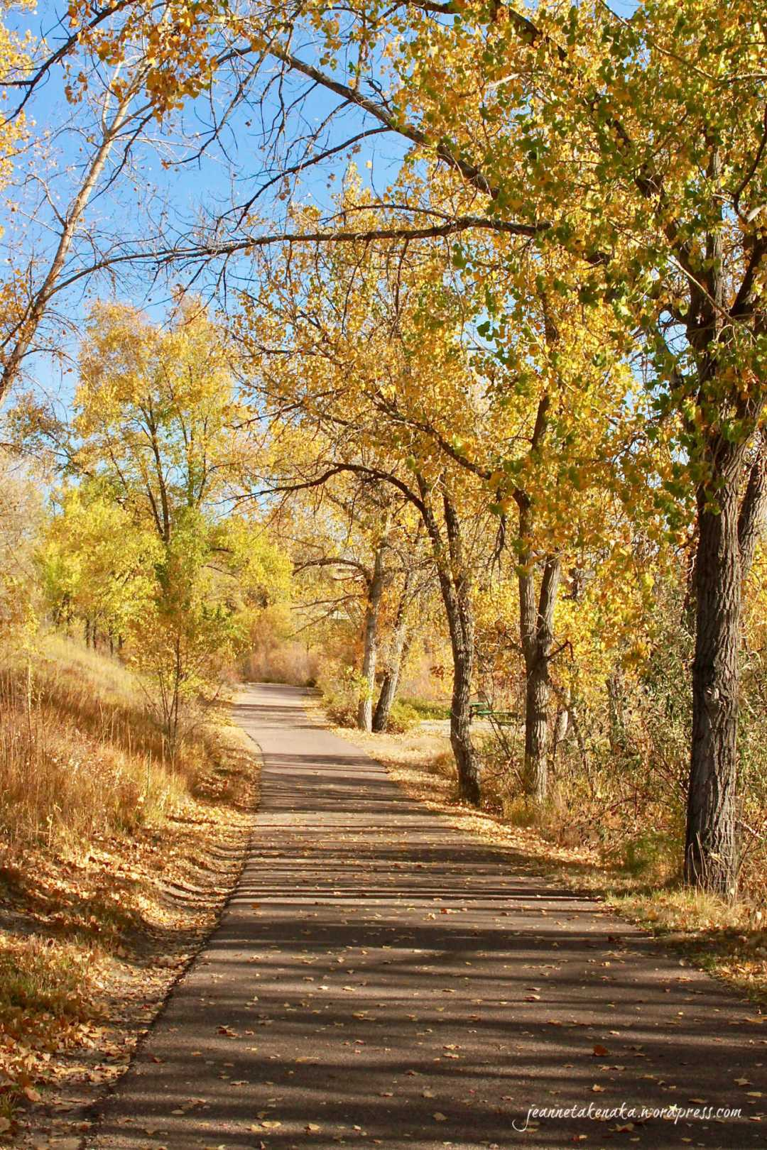 A path lined with autumn colored trees