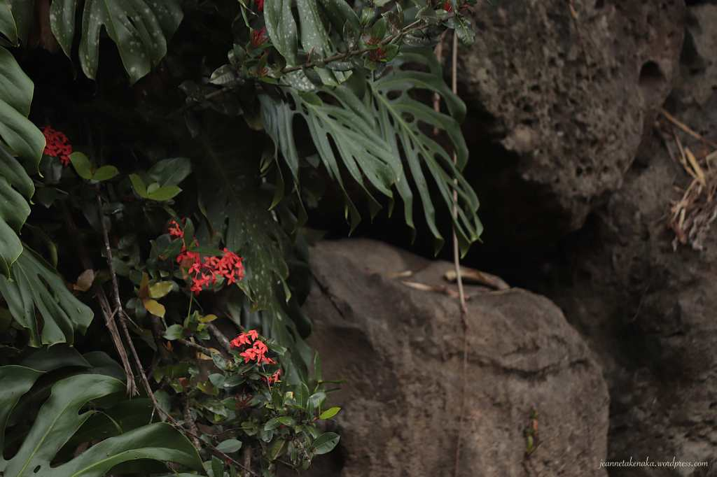 Small red flowers growing amid tall plants near a rock