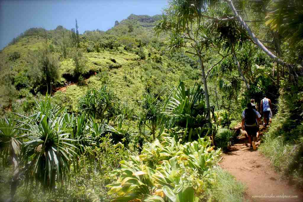 Young men hiking on a trail surrounding by lush vegetation leading into a valley