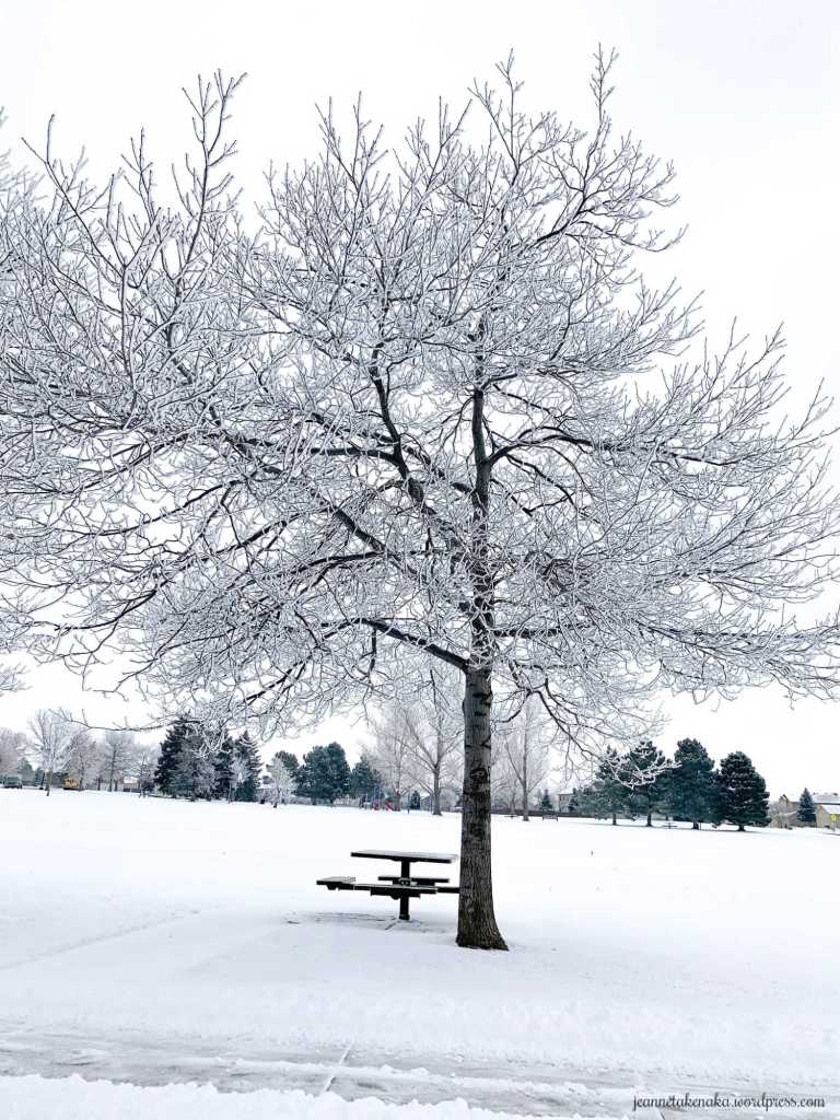 A large barren tree highlighted with white snow