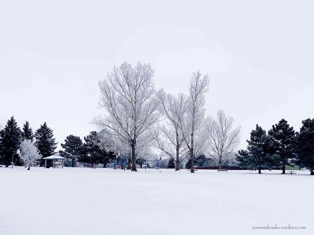 A white grouping of trees on an overcast, snowy day.
