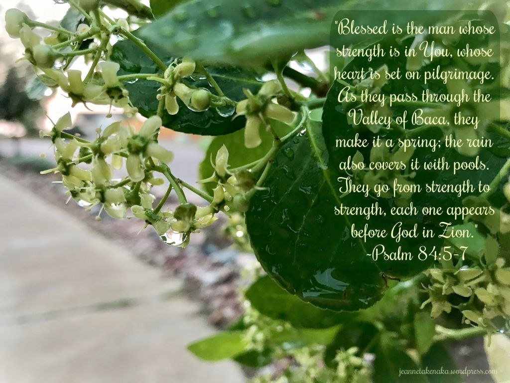 "Meme: ""Blessed is the man whose strength is in You, whose heart is set on pilgrimage. As they pass through the Valley of Baca, they make it a spring; the rain also covers it with pools. They go from strength to strength, each one appears before God in Zion."" ~Psalm 84:5-7 on a backdrop of rain soaked flowers"