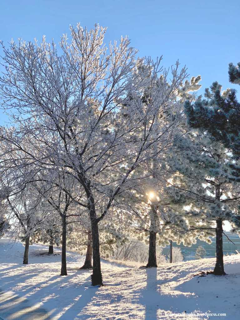 A photo of trees with snow and hoarfrost against a blue sky backdrop, a reminder of hope and beauty amid trials