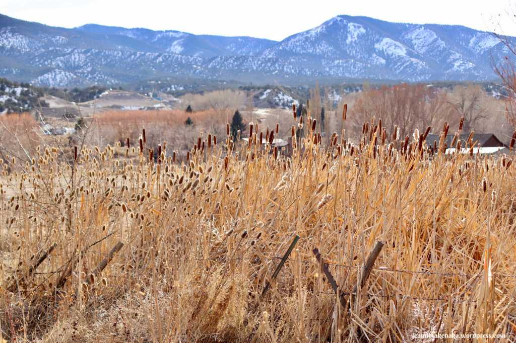Golden cattails in the foreground with a farm and mountains in the background, seeing more beauty