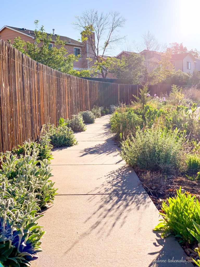 A pretty sidewalk lined with a fence and wild flowers on each side and the sun shining from the side...we keep moving forward