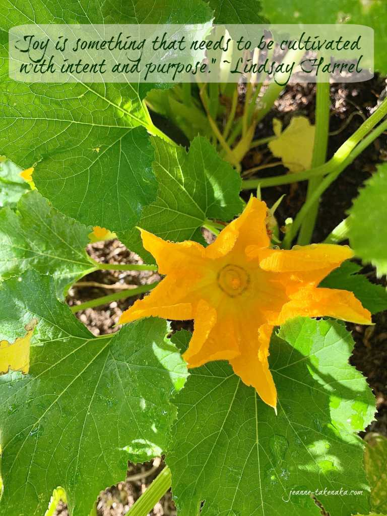 """A meme that says, """"Joy is something that needs to be cultivated with intent and purpose."""" ~Lindsay Harrel on a backdrop of an open zucchini blossom"""