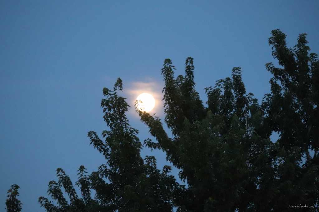 Moon shimmering on some clouds and rising above tree branches
