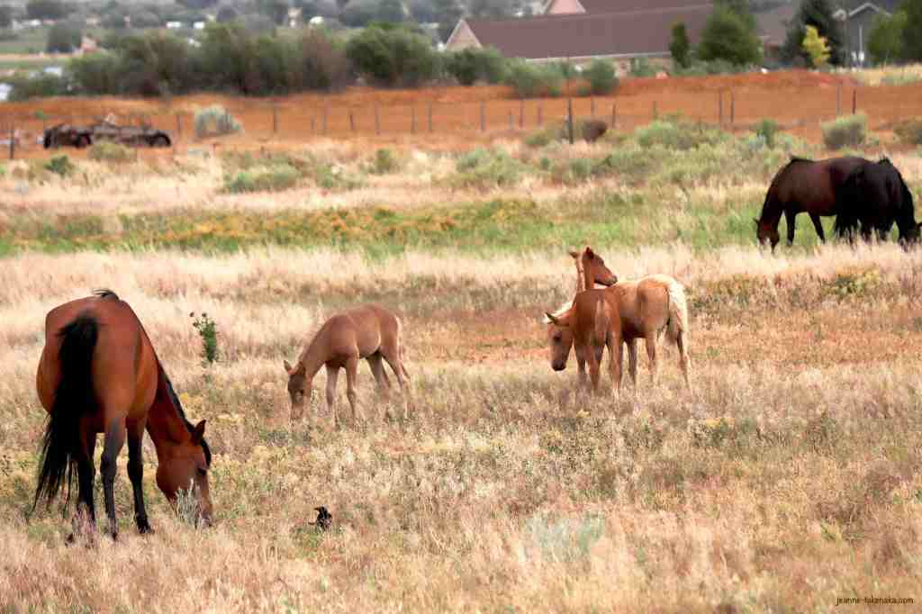 A pasture with colts and mama horses