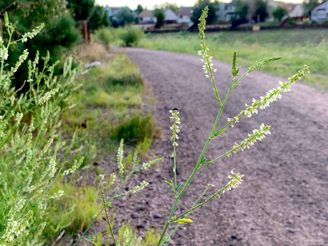 An image of a gravel path with a wildflower growing toward the path